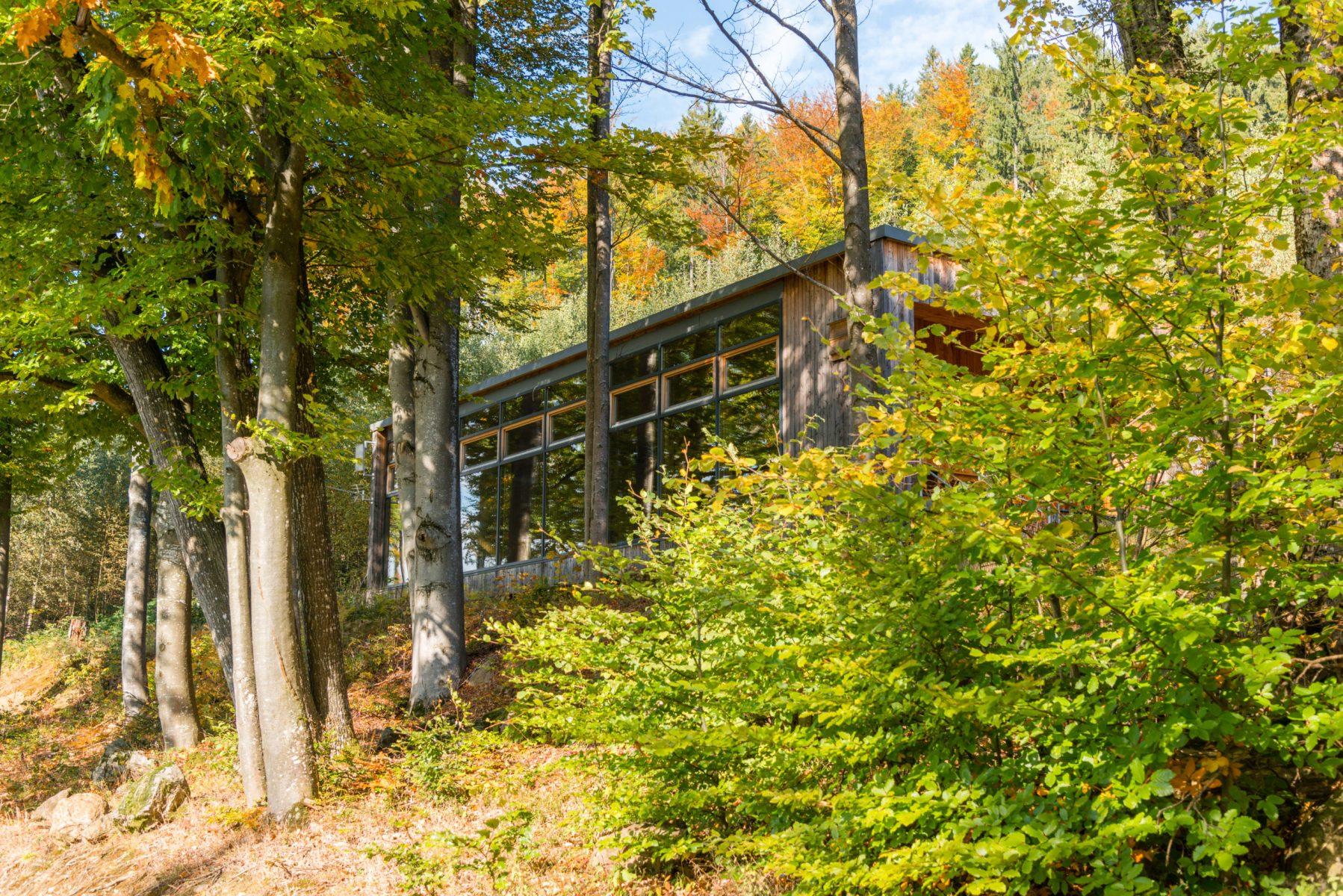 naturhaus, herbst, wald, blätter, laub