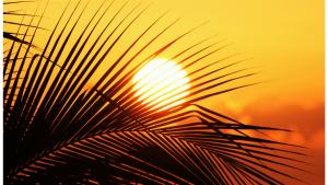 Sonne = Vitamin D
